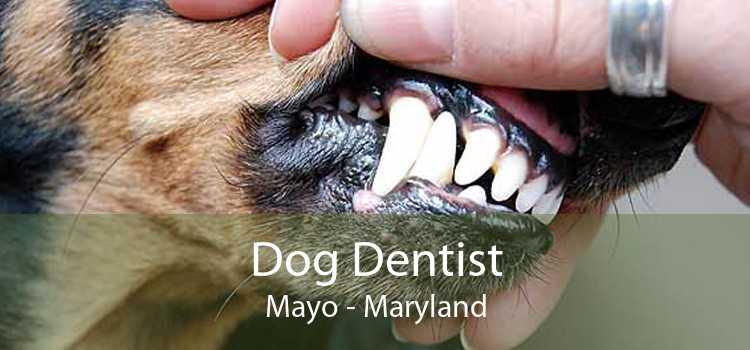 Dog Dentist Mayo - Maryland