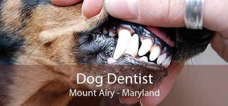 Dog Dentist Mount Airy - Maryland