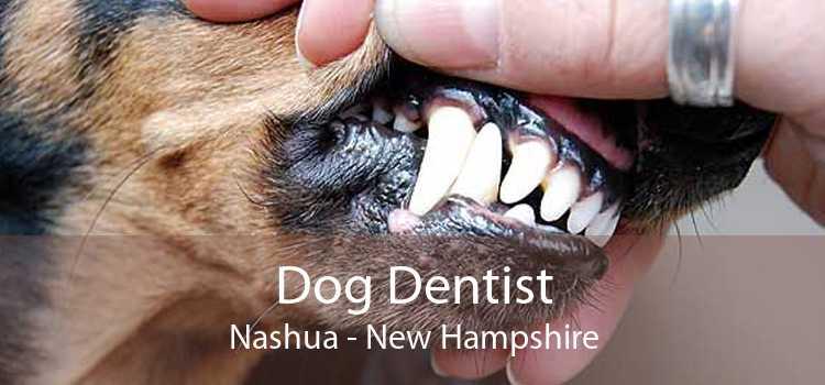 Dog Dentist Nashua - New Hampshire