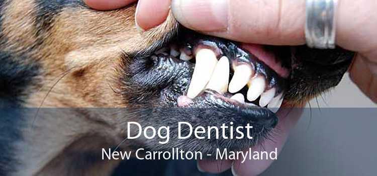 Dog Dentist New Carrollton - Maryland