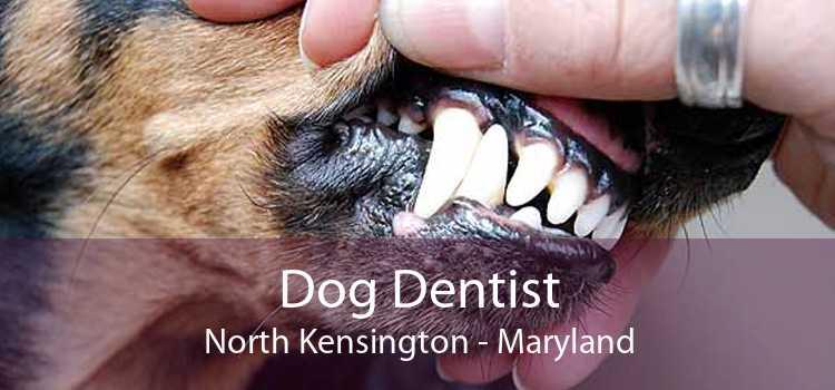 Dog Dentist North Kensington - Maryland
