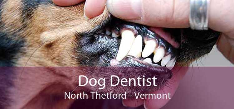 Dog Dentist North Thetford - Vermont