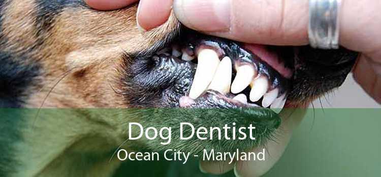 Dog Dentist Ocean City - Maryland