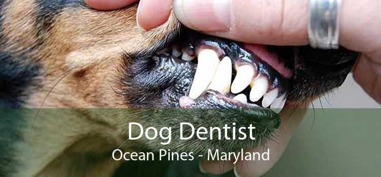 Dog Dentist Ocean Pines - Maryland