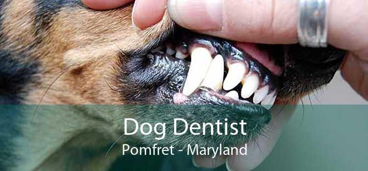 Dog Dentist Pomfret - Maryland