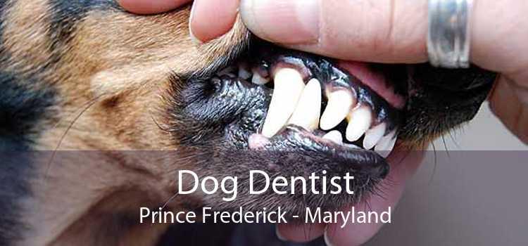 Dog Dentist Prince Frederick - Maryland