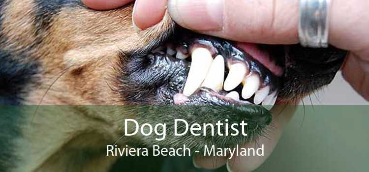 Dog Dentist Riviera Beach - Maryland
