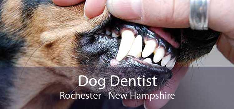 Dog Dentist Rochester - New Hampshire
