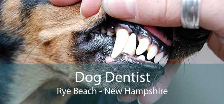 Dog Dentist Rye Beach - New Hampshire