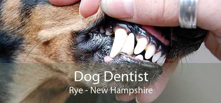 Dog Dentist Rye - New Hampshire