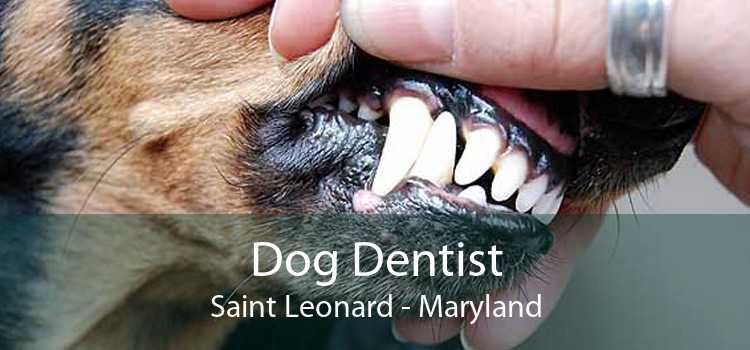 Dog Dentist Saint Leonard - Maryland