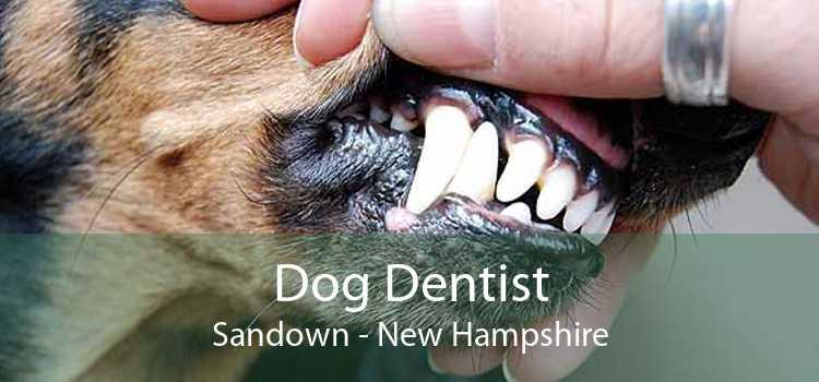 Dog Dentist Sandown - New Hampshire