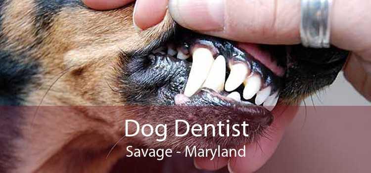 Dog Dentist Savage - Maryland