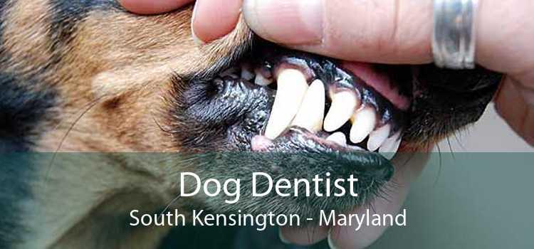 Dog Dentist South Kensington - Maryland