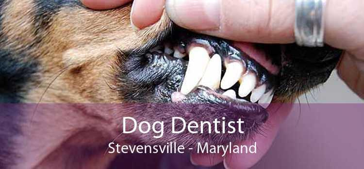 Dog Dentist Stevensville - Maryland