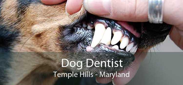 Dog Dentist Temple Hills - Maryland