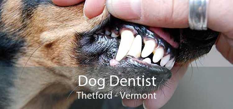 Dog Dentist Thetford - Vermont