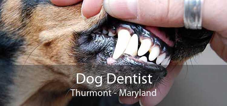 Dog Dentist Thurmont - Maryland