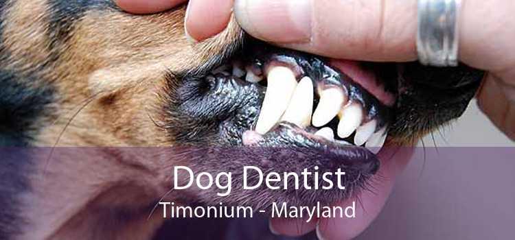 Dog Dentist Timonium - Maryland