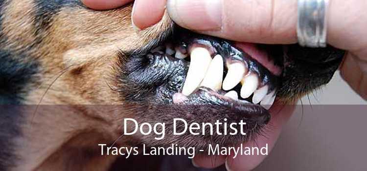 Dog Dentist Tracys Landing - Maryland