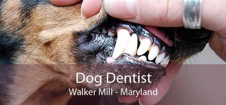 Dog Dentist Walker Mill - Maryland