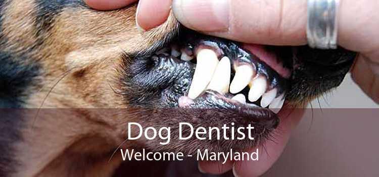 Dog Dentist Welcome - Maryland