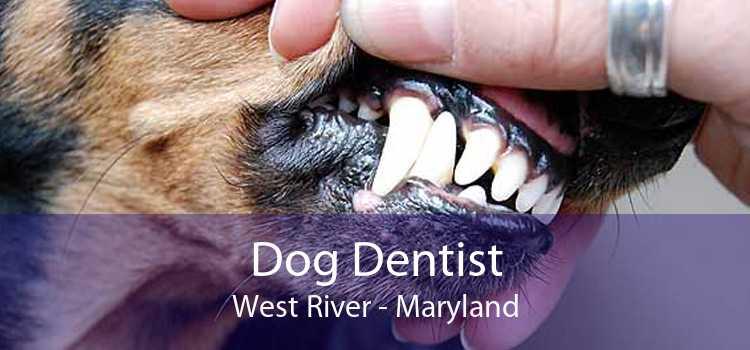 Dog Dentist West River - Maryland