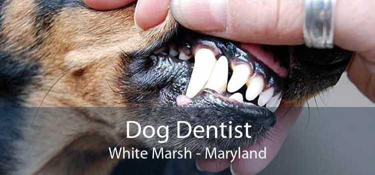 Dog Dentist White Marsh - Maryland