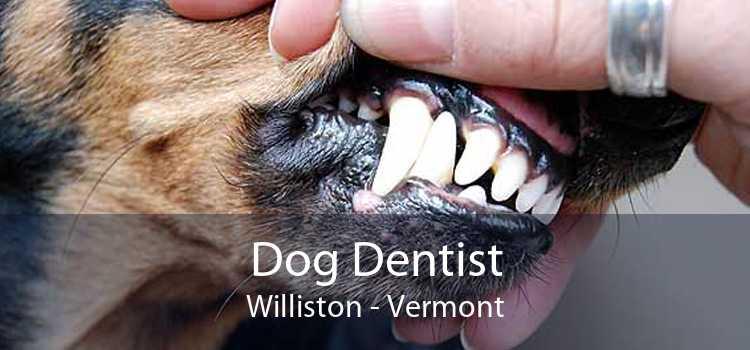Dog Dentist Williston - Vermont