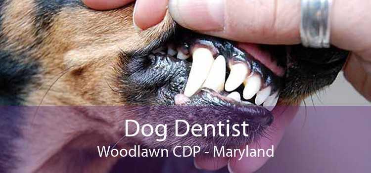 Dog Dentist Woodlawn CDP - Maryland