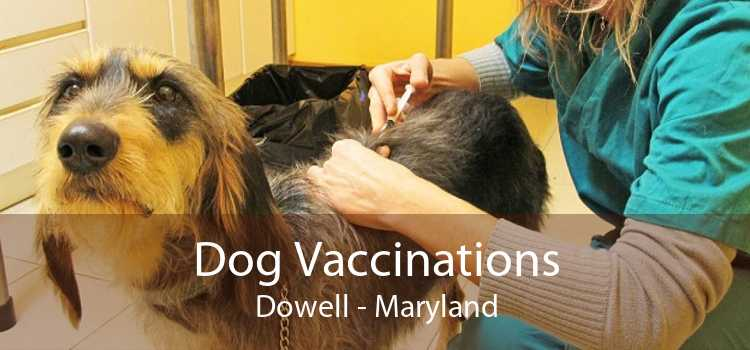 Dog Vaccinations Dowell - Maryland
