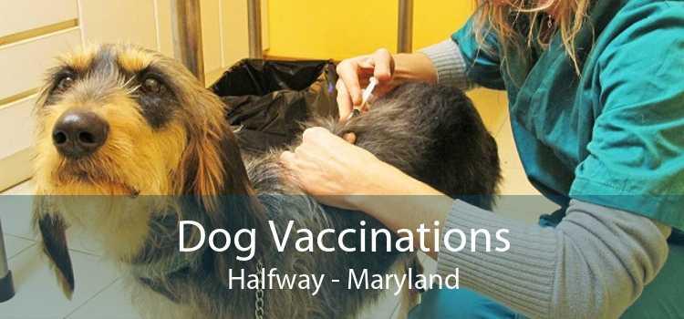 Dog Vaccinations Halfway - Maryland