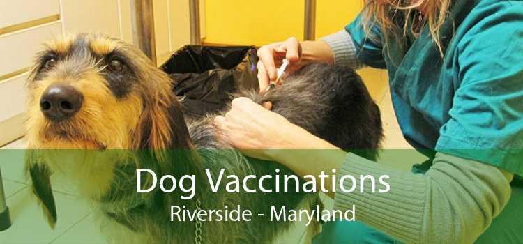 Dog Vaccinations Riverside - Maryland