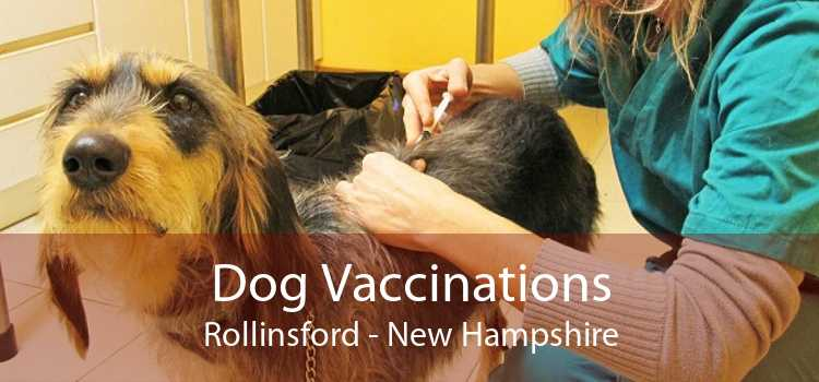 Dog Vaccinations Rollinsford - New Hampshire