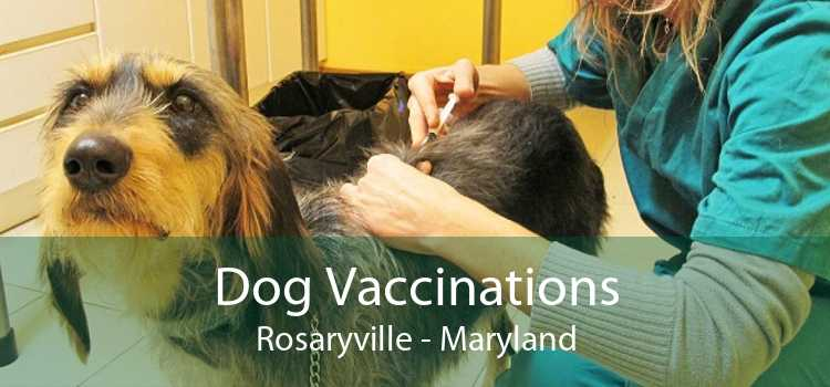 Dog Vaccinations Rosaryville - Maryland