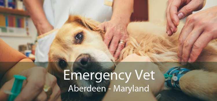 Emergency Vet Aberdeen - Maryland