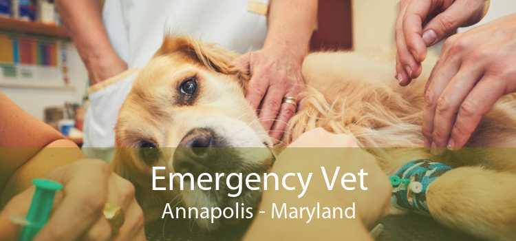Emergency Vet Annapolis - Maryland