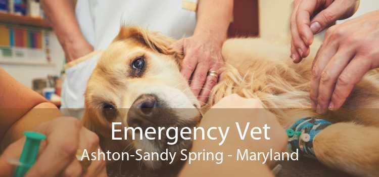 Emergency Vet Ashton-Sandy Spring - Maryland