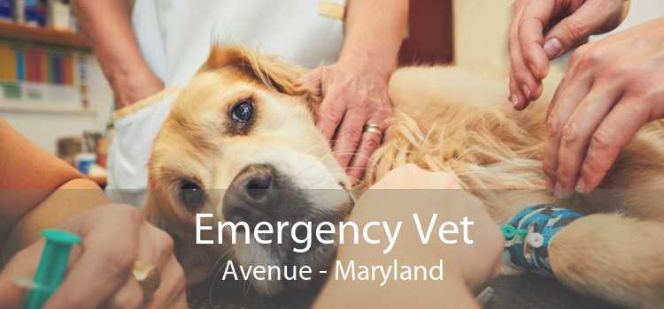 Emergency Vet Avenue - Maryland