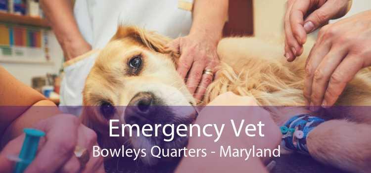 Emergency Vet Bowleys Quarters - Maryland