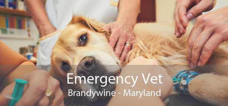 Emergency Vet Brandywine - Maryland