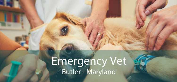 Emergency Vet Butler - Maryland