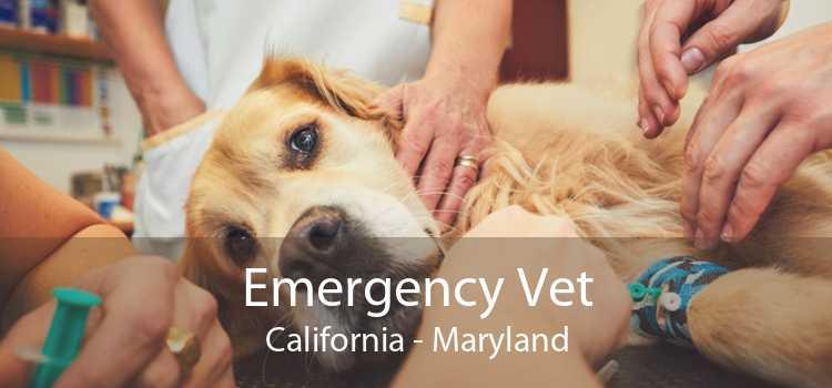 Emergency Vet California - Maryland