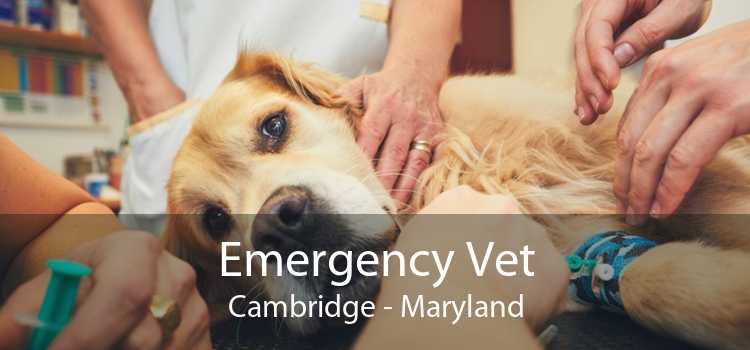 Emergency Vet Cambridge - Maryland