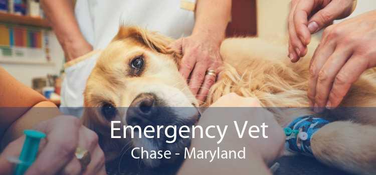 Emergency Vet Chase - Maryland