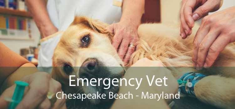 Emergency Vet Chesapeake Beach - Maryland