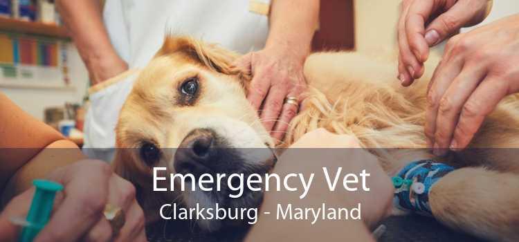 Emergency Vet Clarksburg - Maryland