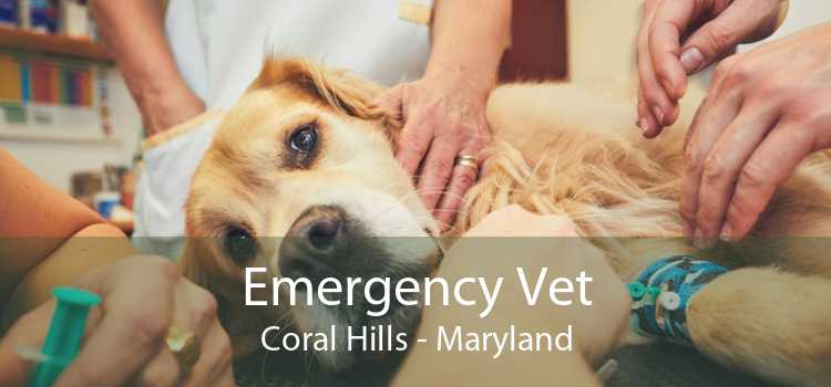 Emergency Vet Coral Hills - Maryland