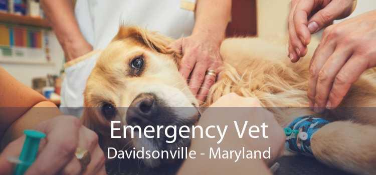 Emergency Vet Davidsonville - Maryland