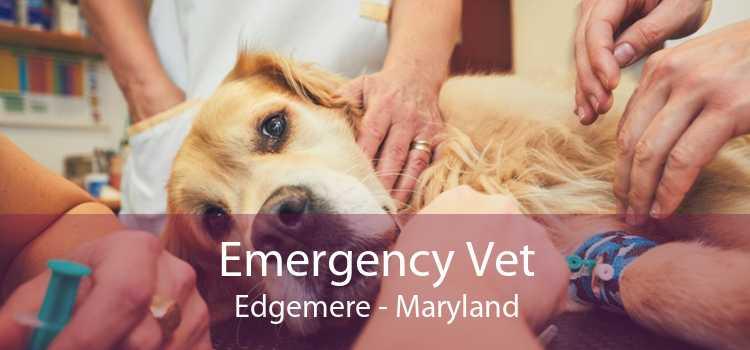 Emergency Vet Edgemere - Maryland